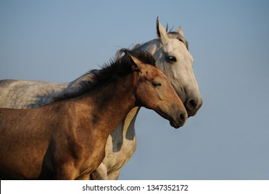 Mare with a foal hugging against the sky. Two horses
