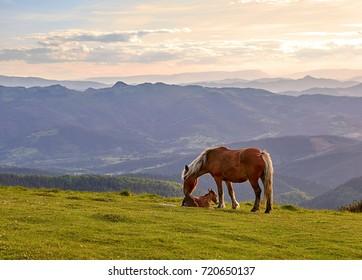 Mare with foal newborn