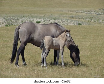 Mare grazing with foal