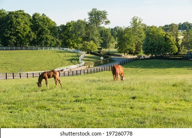 Mare With Her Colt In Pastures Of Horse Farms Country Summer Landscape