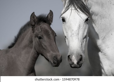 Mare with her little foal