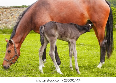Mare and her young foal