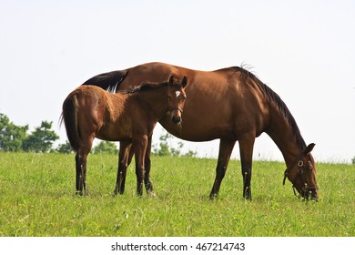 A Mare Horse and Colt