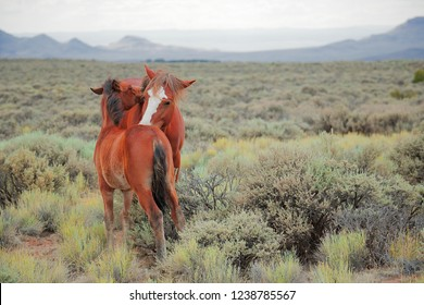 A mare nuzzling her colt in the New Mexico Desert