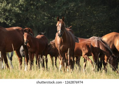Mare and offspring in the pasture.