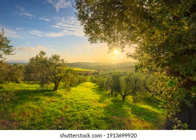 Maremma countryside panoramic view, olive trees, rolling hills and green fields. Sea on the horizon. Casale Marittimo, Pisa, Tuscany Italy Europe.