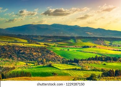 Maremma countryside, rolling hills, trees and Magona forest at sunset. Bibbona, Tuscany, Italy. Europe.