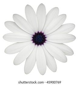 margarita white background