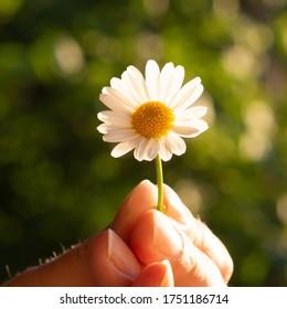 Margerite in der Hand halten - Shutterstock ID 1751186714