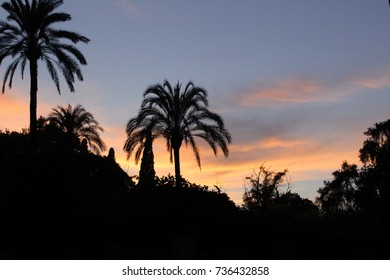 Maria Luisa park palm trees at sunset with red clouds