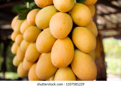 Marian plum or gandaria or plum mango on stall for sell at local shop in Nakhon Nayok, Thailand