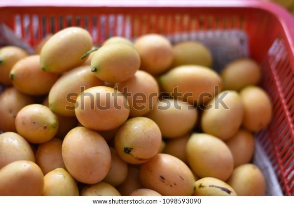 Marian Plums Plum Mangoes Scientific Name Stock Photo Edit Now