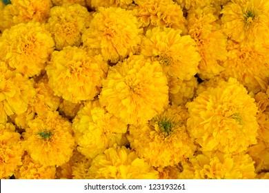 Marigold background