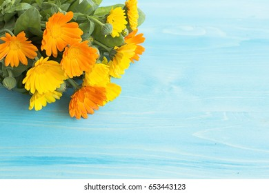 Marigold, Calendula Officinalis with Copy Space on a Blue Wooden Background.