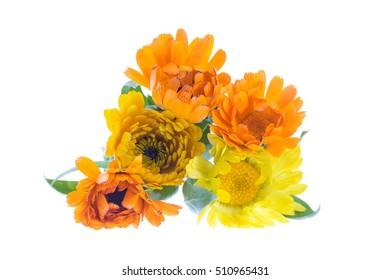 Marigold, calendula officinalis on a white