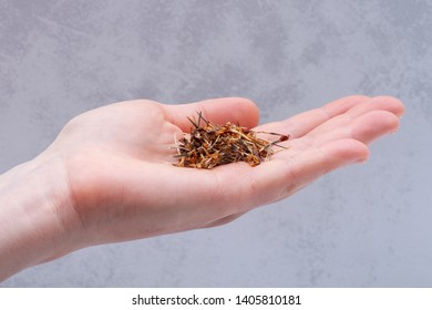 Marigold Dry Seeds (Mexican marigold, Aztec marigold, African marigold) in woman's hand. Tagetes erecta. Daisy family.