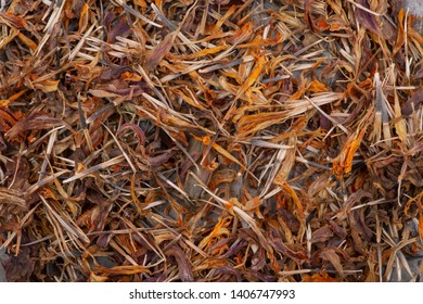 Marigold Dry Seeds (Mexican marigold, Aztec marigold, African marigold) as a background. Tagetes erecta. Daisy family.