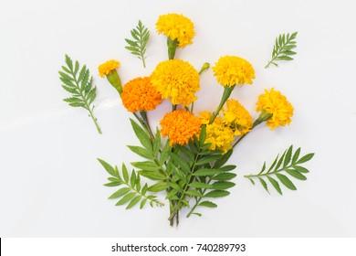 Marigold flowers so beautiful on white background