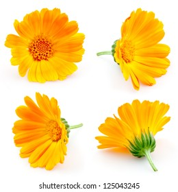 marigold flowers. Calendula. flowers isolated on white. set