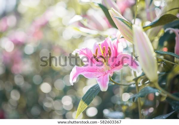 Marigold flowers close up.Selective focus.Blur background.