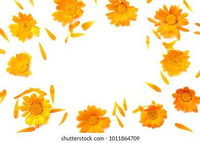 Marigold flowers isolated on white background stock photo royalty marigold flowers isolated on white background calendula flower top view mightylinksfo