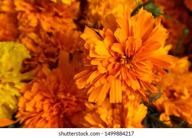 marigold flowers mexico day dead 260nw