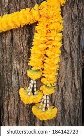 Marigold flowers on the tree