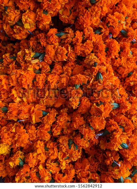 Marigold Genda Phool Flower Decoration Stock Photo Edit Now