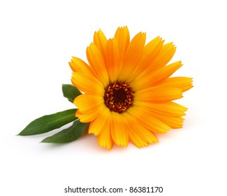 Marigold with leaves