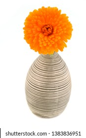 Marigold in vase, isolated on white background. Calendula officinalis.