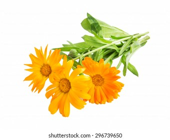 Marigold,Calendula Officinalis Medicinal Plant Isolated on White