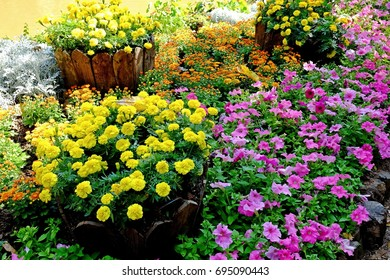 Marigolds and colorful flowers in flowerbed grow in the garden.