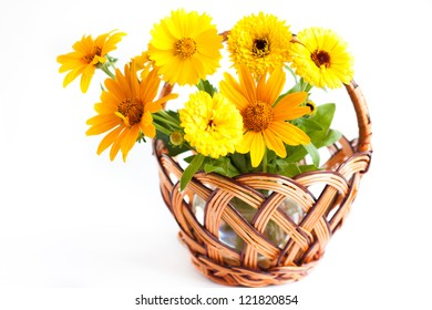 marigolds in a wicker basket on a white background, flowers