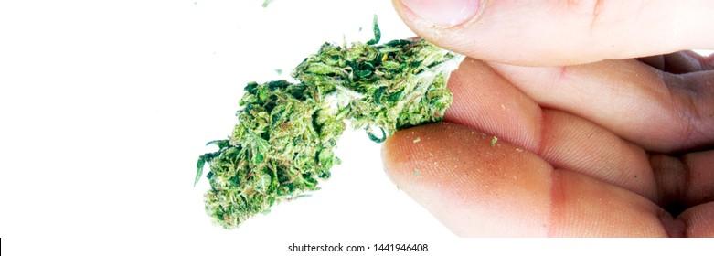 Marijuana Bud in Hand on White Background