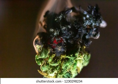 A marijuana bud isolated. Burning and smouldering away slowly. Thisck white smoke billows up from black burnt bud.