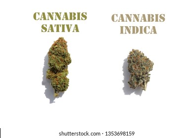 Marijuana. Cannabis. Isolated on white. Room for text. Cannabis Sativa and Cannabis Indica side by side isolated on white as examples of different strains.