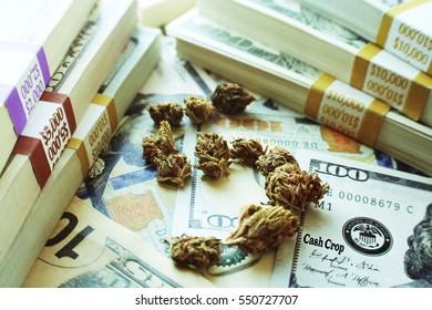 Marijuana Cash Crop