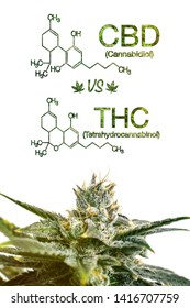 Marijuana CBD Vs THC Poster with Scientific Formula on White Background