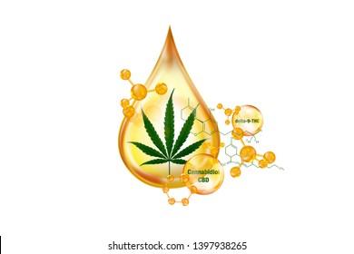 marijuana essential oil, oil drop of cannabis , cbd drop