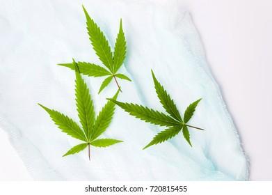 Marijuana green leaves on colorful textile background
