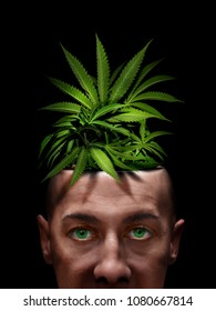 marijuana growing indoor on junkie brain, he thinks it's medical cannabis