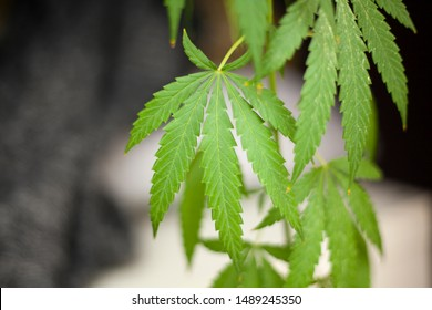 Weed Hippie Stock Photos, Images & Photography | Shutterstock