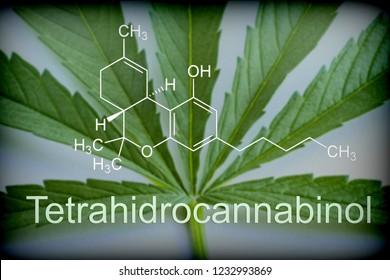 Marijuana leaf chemical composition of tetrahydrocannabinol, conceptual image