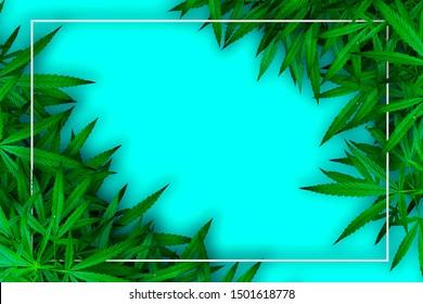 Marijuana leaf and hemp oil pictures dark background, beautiful background