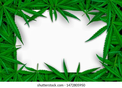 Marijuana leaf illustrations on cannabis Dark background, beautiful background, top corner picture