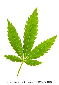Marijuana leaf isolated on white