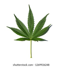 Marijuana leaf on white background with shadow