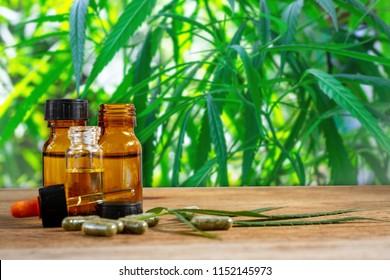 Marijuana leaves extracted from marijuana. Marijuana Extract and Capsule