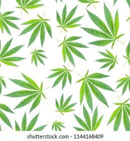 marijuana leaves seamless pattern on white background. cannabis background. concept of drugs, hemp