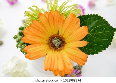 Marijuana Nug sitting in Middle of Bright Orange Gerbera Daisy Flower - Cannabis Spring Floral Bouquet - Cannabis Wedding